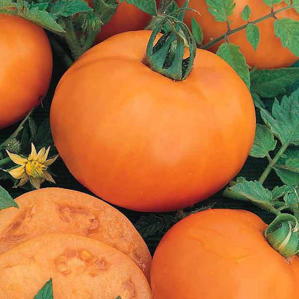 Оранжевые помидоры.