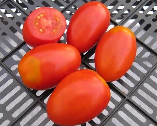 Плоды помидоров Акварель