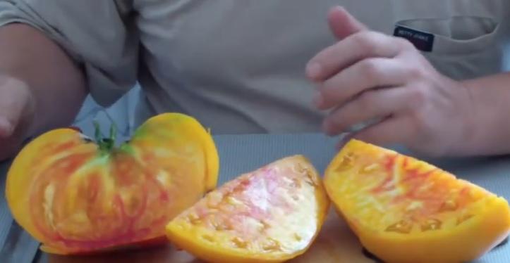 Помидор Грейпфрут в разрезе