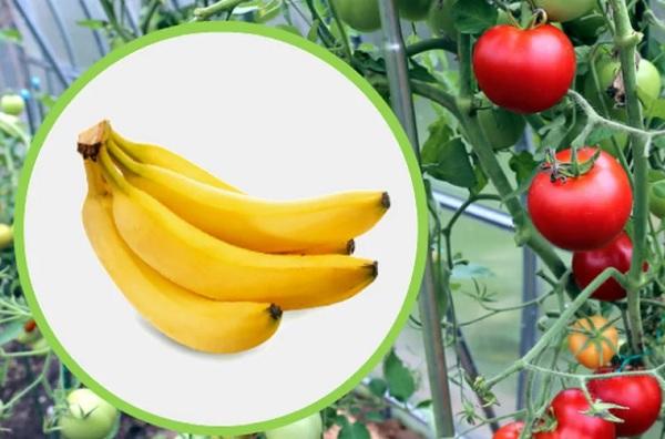 Бананы и томаты