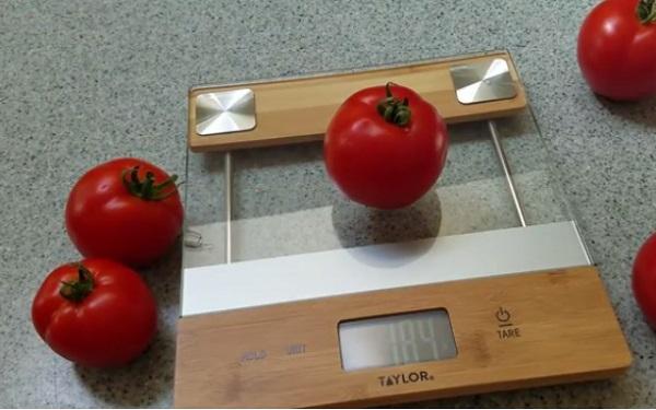 Взвешивание помидоров