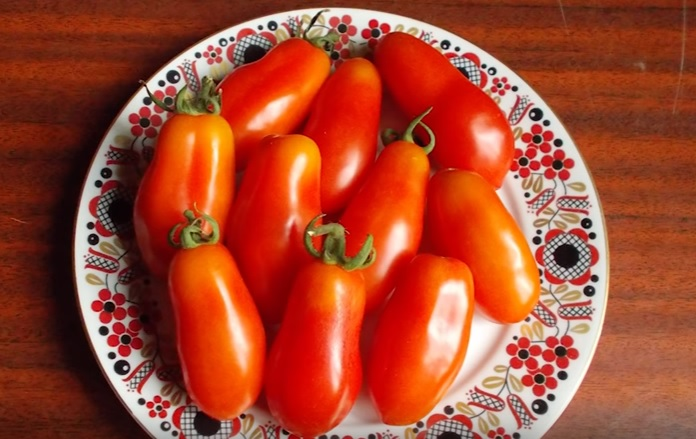 Плоды помидоров сорта Кибиц