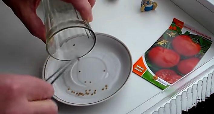 Подготовка семян к высеву