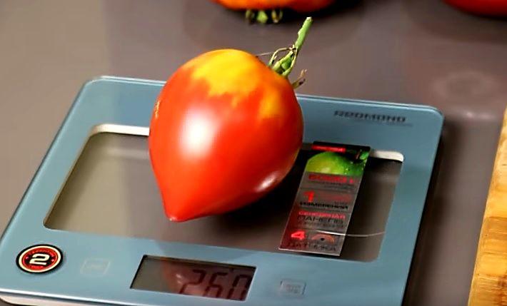 Плод помидора