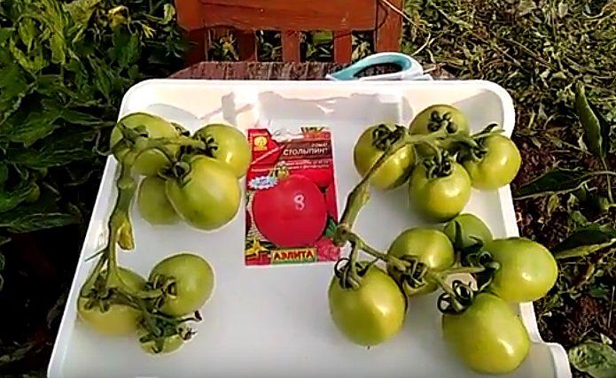 Срезанные кисти с плодами помидоров