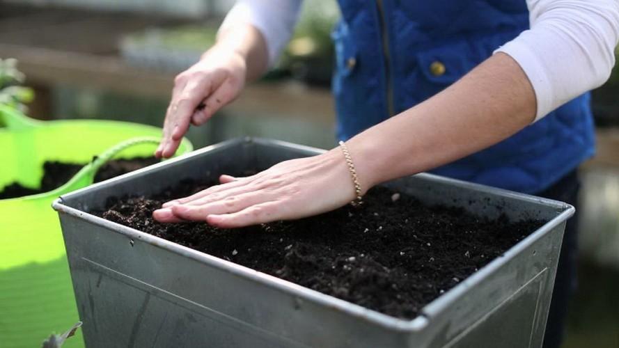 Приготовление грунта для рассады томатов