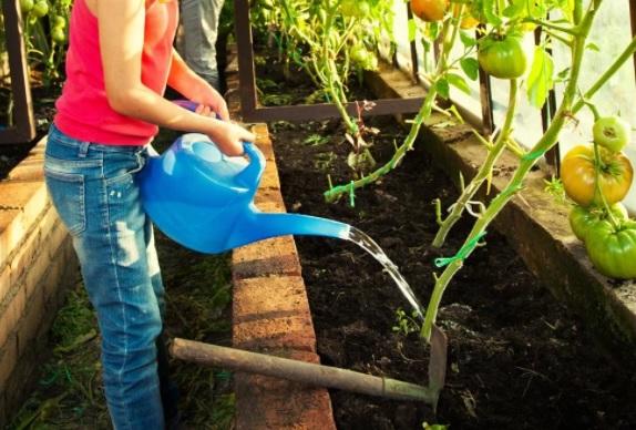 Полив овощей в теплице