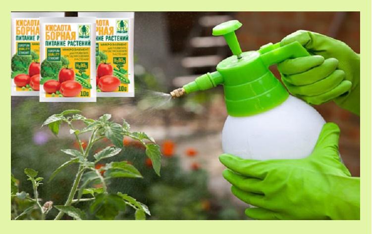 Опрыскивание томатов раствором бора