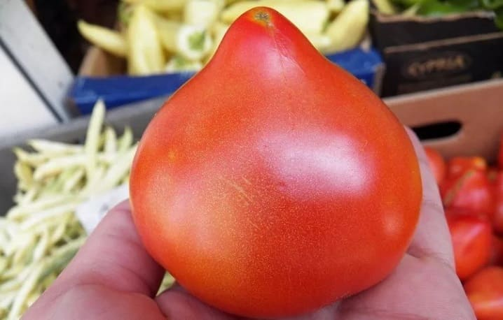 Спелый помидор