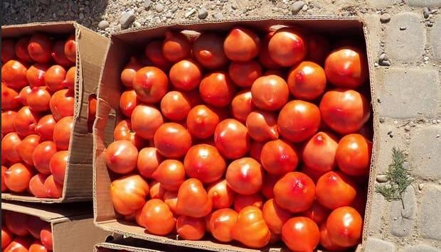 Коробки с помидорами