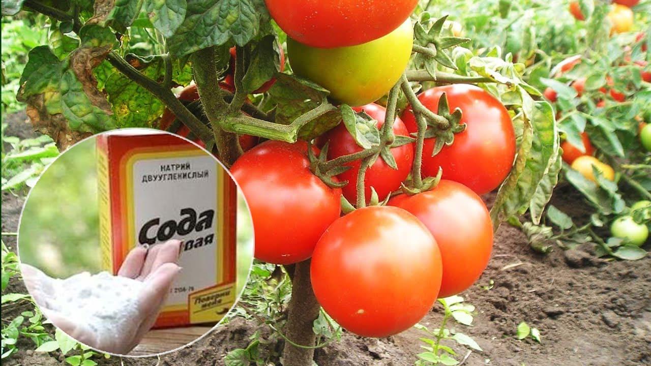 Сода для томатов