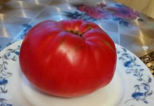 Созревший помидор